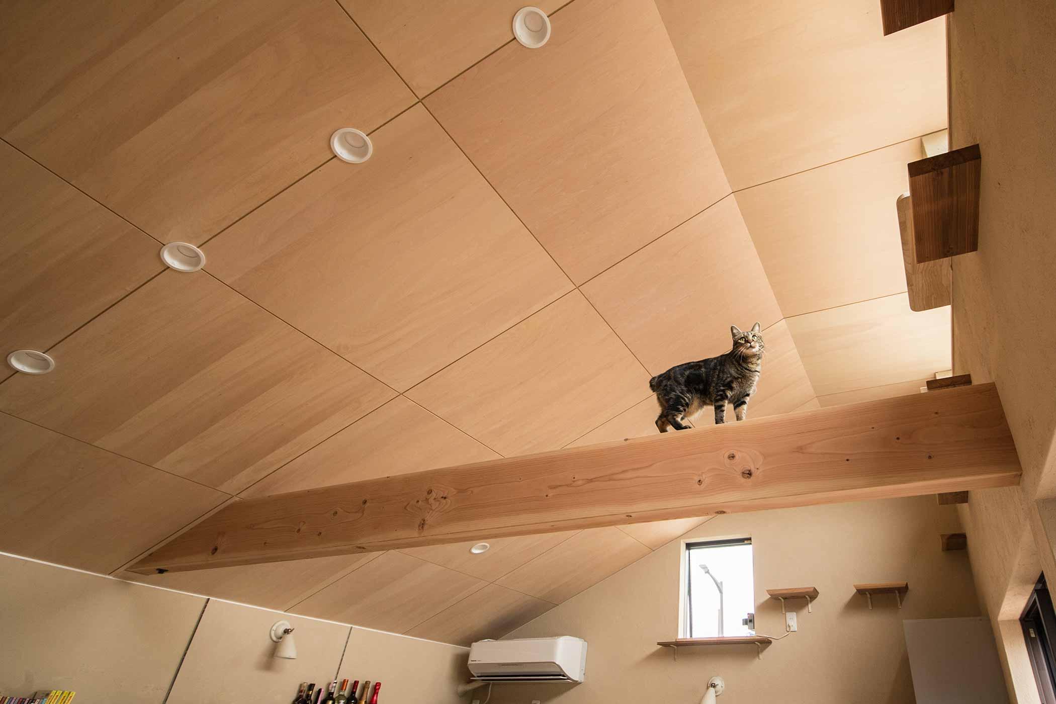 猫たちとの安心な暮らしを「まもるん。」